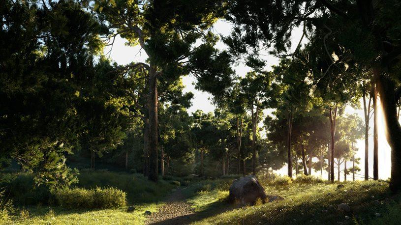 TEMPERATE CONIFEROUS TREES
